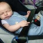 Leon im Autositz