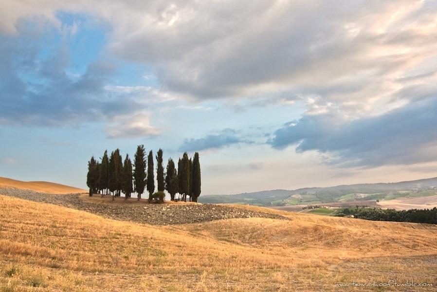 Flickr_TuscanyCipresses_byMaartenVanHoof