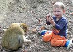 Leon mit Affen