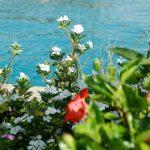 blumen_hurghada