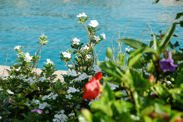 Blumen in Hurghada