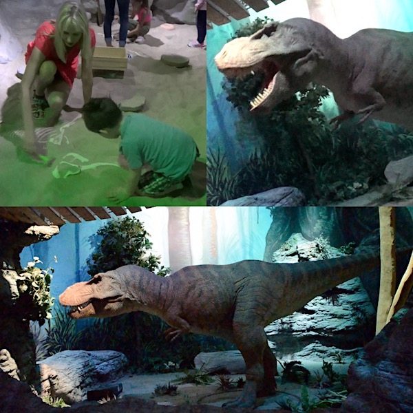Museum Dinosaurier