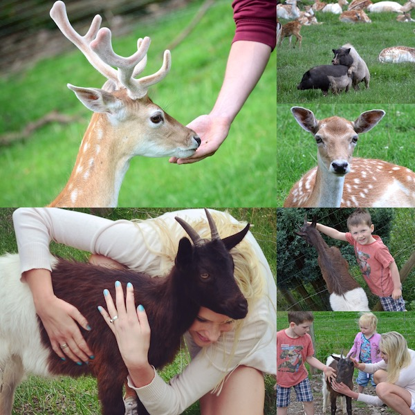 wo kann ich Tiere füttern