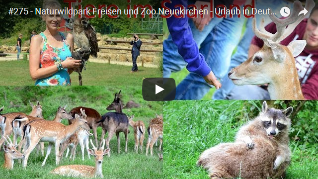ElischebaTV_275_640x360 Naturwildpark Freisen Zoo Neunkirchen Saarland