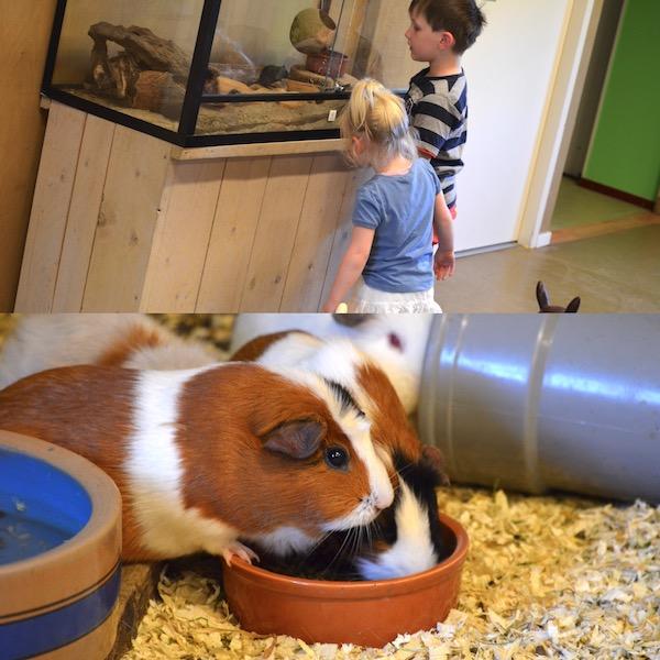 Kinderboerderijen-Zwolle