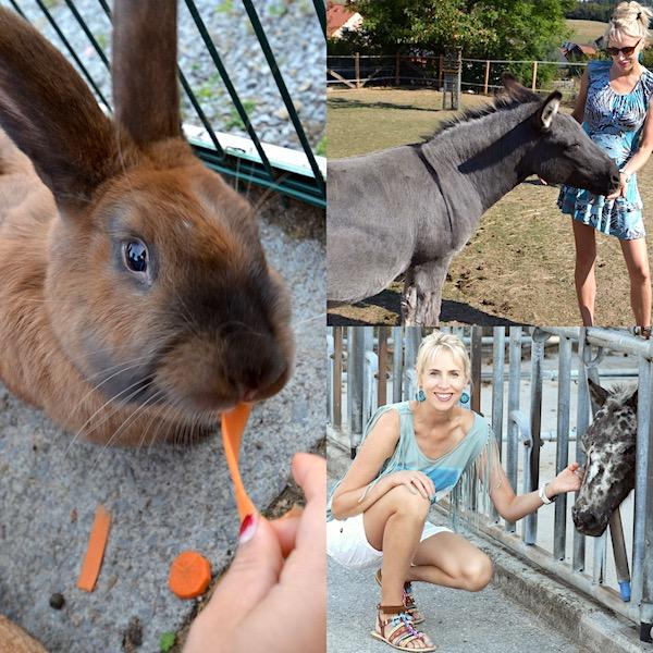 Tiere im Familotel Sauerland
