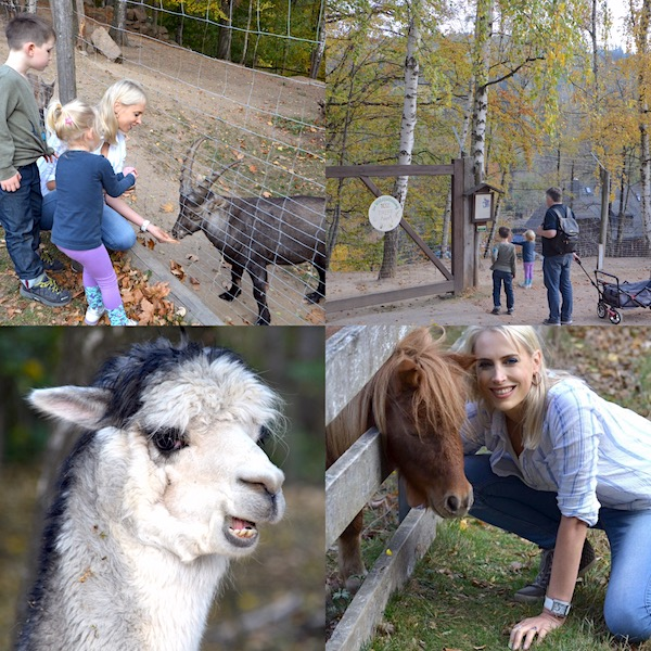 Tierpark im Erzgebirge mit Lamas