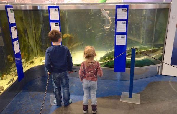 Aquarium im Besucherzentrum