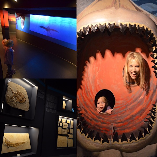 Urzeitbereich Aquarium