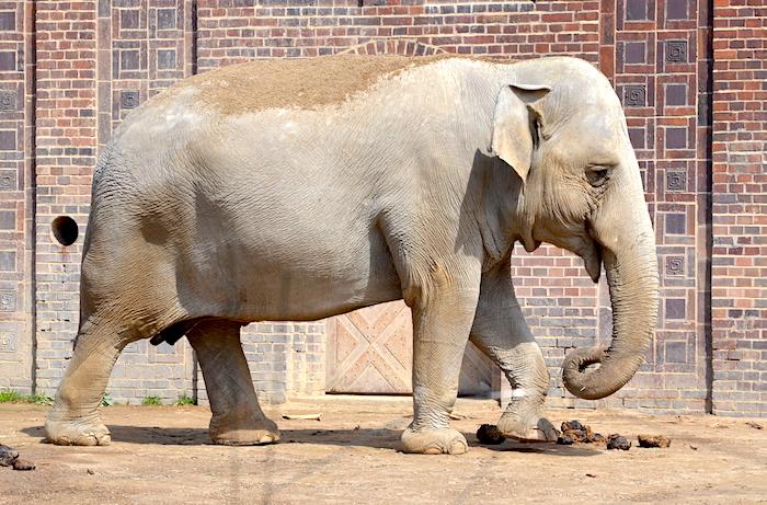 Elefanten im Zoo Leipzig